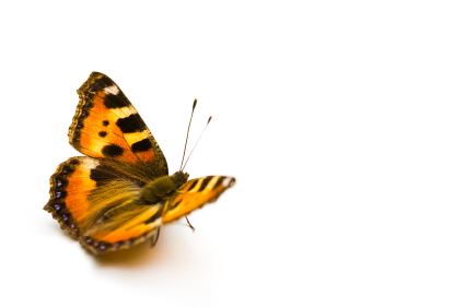 butterfly photo istock